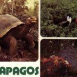 La Voz De Galapagos